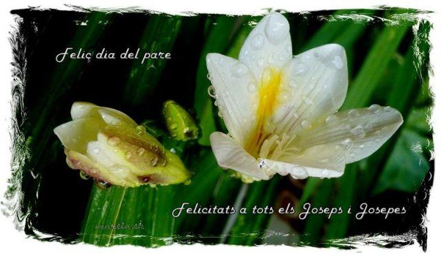 Feliç dia de Sant Josep 19 03 16N